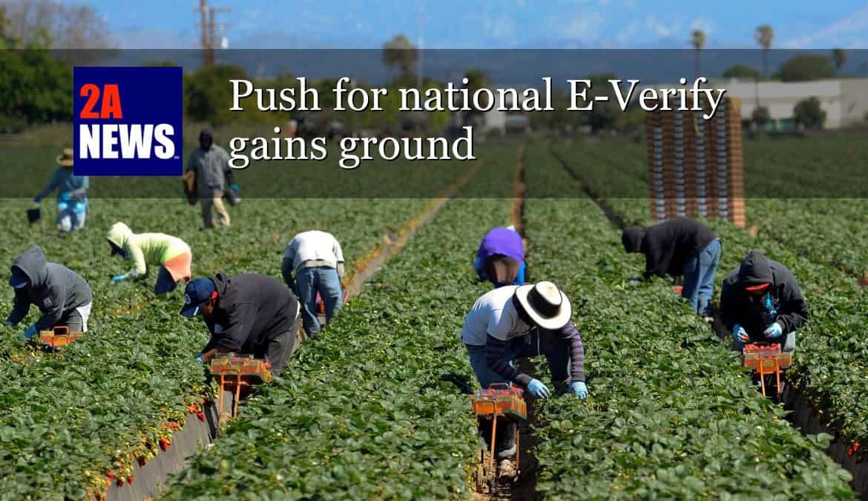 Push for national E-Verify gains ground